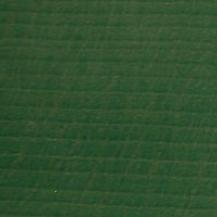 Buk zelený